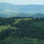 Sapling Ridge