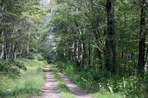Jack-Wilson-Mtn-USFS-Road-1 300