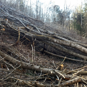 Timber felling for the ACP corridor in the National Forest. The DPMC is concerned that the DEQ will allow construction to proceed without providing an opportunity for further review by the State Water Control Board and the public.
